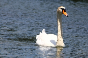 """I know my drafts start out as """"ugly ducklings."""" Now, if I could just convince myself that at some point, after multiple and substantial edits, they've become swans....."""