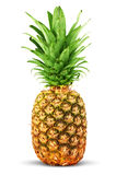 colorful-pineapple-21585578